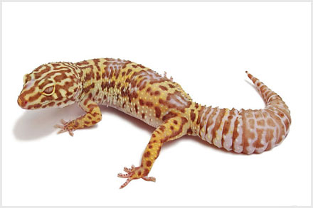 reptile dating site The new kentucky reptile expo is held each month in different cities throughout  kentucky, ohio & in evansville, indiana the show features captive bred.